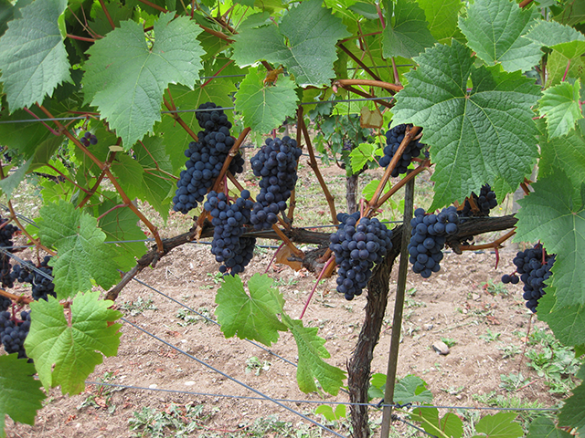 The Nest of Blue Grouse Estate Winery
