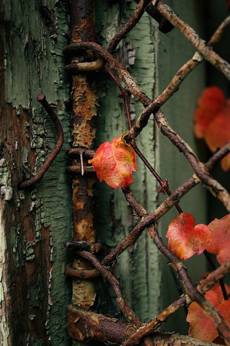 Peeling Green Paint Rusty Fence