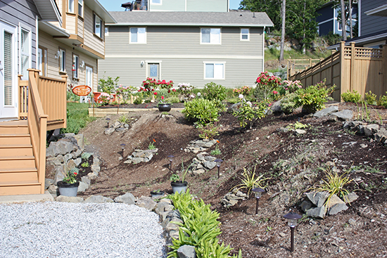 Landscaped Bank, Full Sun Plants, Dry Soil