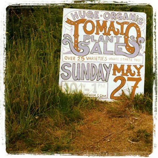 Makaria Farm Organic Tomatoes