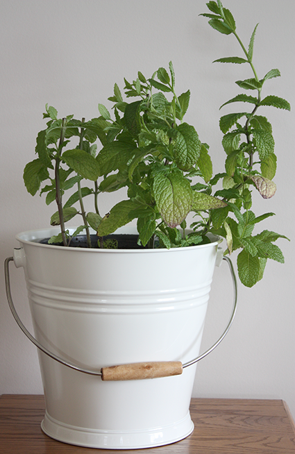 Pail of Mint