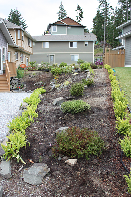 Landscaping with Heather Shrubs