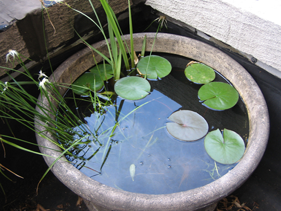 Container water gardens sheila zeller interiors for Plastic garden fish ponds