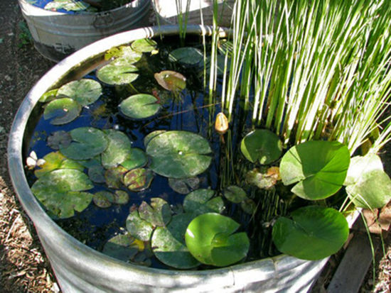 Creating a Container Water Garden