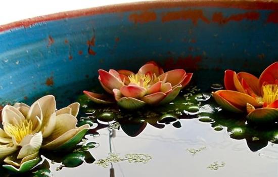 Container Water Garden