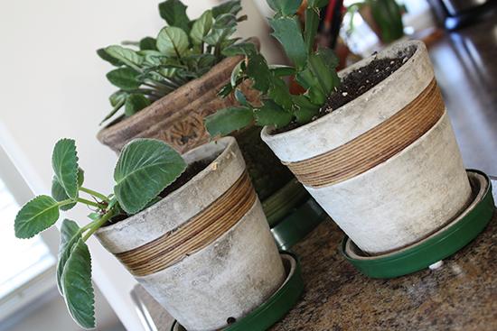 Plastic Trays for Ceramic Pots