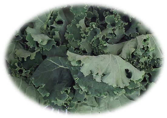 Organic Kale Makaria Farm