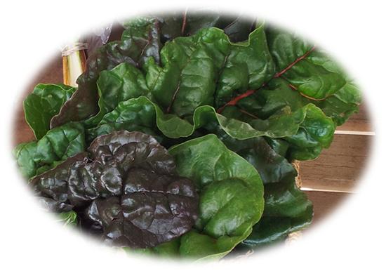 Organic Swiss Chard - Makaria Farm