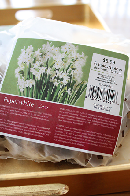 Paperwhites from Home Depot