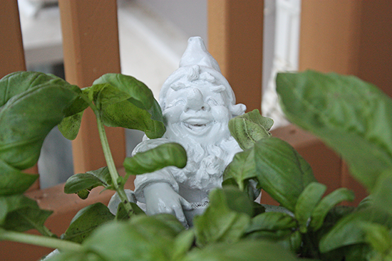 Basil - Container Planting
