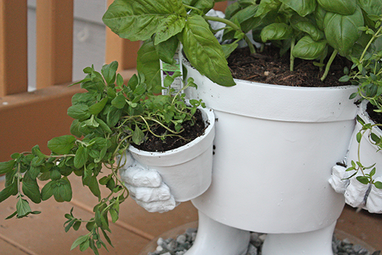 Sweet Marjoram - Container Planting