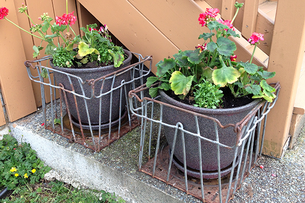 Milk Crates Potted Up